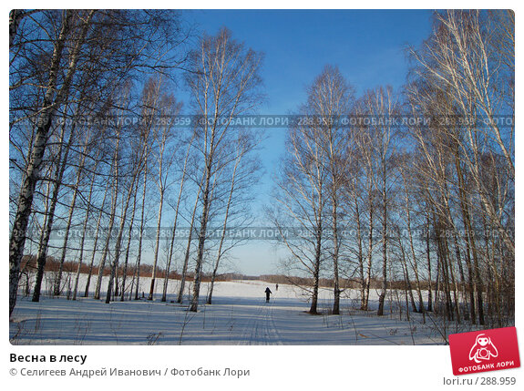 Весна в лесу, фото № 288959, снято 23 марта 2008 г. (c) Селигеев Андрей Иванович / Фотобанк Лори