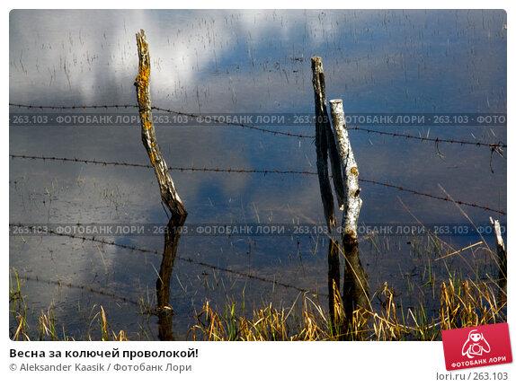 Весна за колючей проволокой!, фото № 263103, снято 26 июля 2017 г. (c) Aleksander Kaasik / Фотобанк Лори