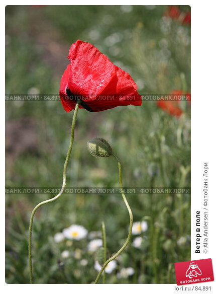 Ветер в поле, фото № 84891, снято 19 мая 2007 г. (c) Alla Andersen / Фотобанк Лори