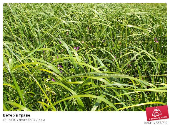 Купить «Ветер в траве», фото № 337719, снято 25 июня 2008 г. (c) RedTC / Фотобанк Лори