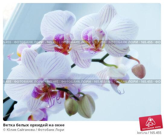 Ветка белых орхидей на окне, фото № 165455, снято 3 января 2008 г. (c) Юлия Сайганова / Фотобанк Лори