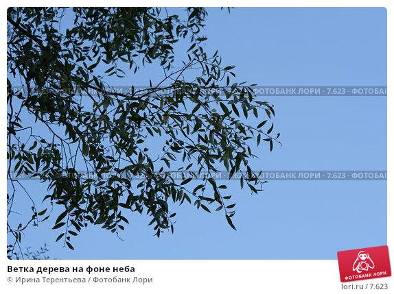 Ветка дерева на фоне неба, эксклюзивное фото № 7623, снято 7 сентября 2005 г. (c) Ирина Терентьева / Фотобанк Лори