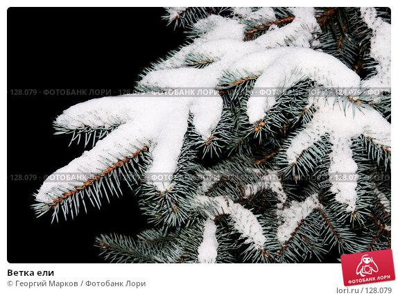 Купить «Ветка ели», фото № 128079, снято 4 ноября 2006 г. (c) Георгий Марков / Фотобанк Лори
