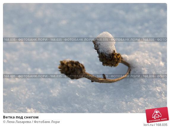 Ветка под снегом, фото № 168035, снято 1 декабря 2007 г. (c) Лена Лазарева / Фотобанк Лори