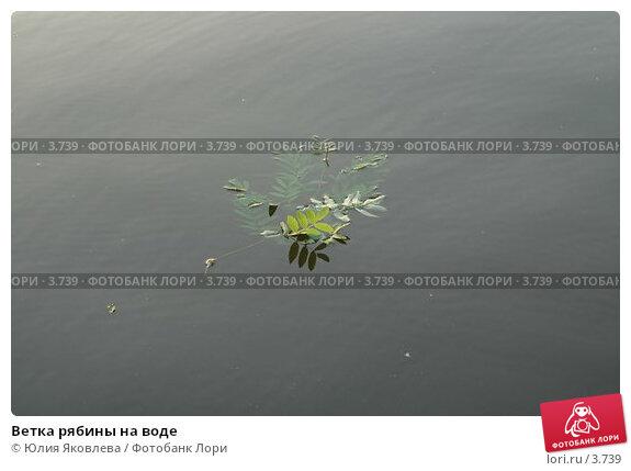Ветка рябины на воде, фото № 3739, снято 4 июня 2006 г. (c) Юлия Яковлева / Фотобанк Лори