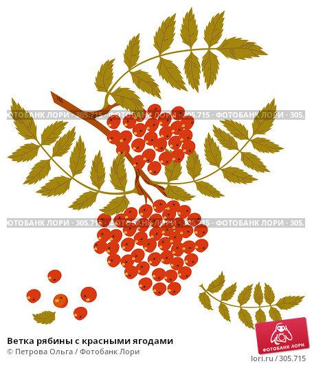 Ветка рябины с красными ягодами, иллюстрация № 305715 (c) Петрова Ольга / Фотобанк Лори