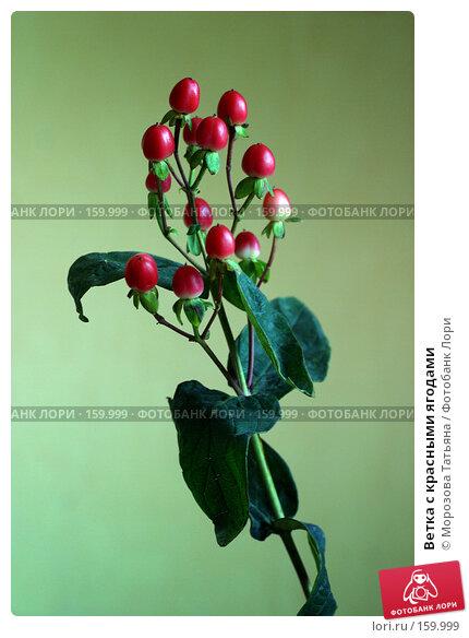 Ветка с красными ягодами, фото № 159999, снято 1 мая 2006 г. (c) Морозова Татьяна / Фотобанк Лори