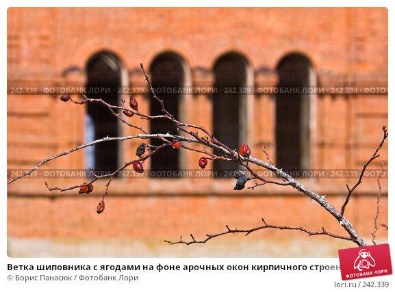 Ветка шиповника с ягодами на фоне арочных окон кирпичного строения, фото № 242339, снято 29 марта 2008 г. (c) Борис Панасюк / Фотобанк Лори