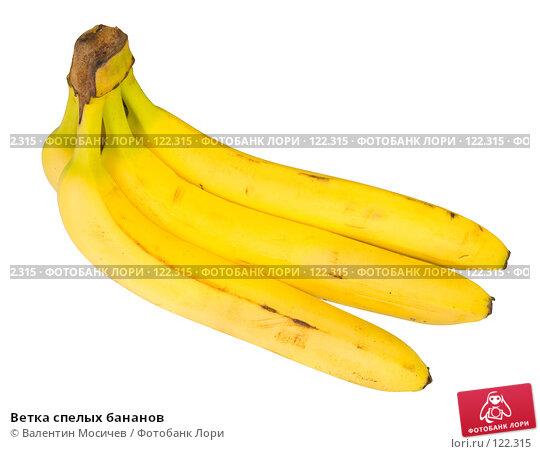 Ветка спелых бананов, фото № 122315, снято 20 января 2007 г. (c) Валентин Мосичев / Фотобанк Лори