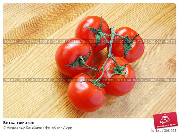 Ветка томатов, фото № 308095, снято 31 мая 2008 г. (c) Александр Катайцев / Фотобанк Лори