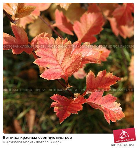 Веточка красных осенних листьев, фото № 309051, снято 22 сентября 2007 г. (c) Архипова Мария / Фотобанк Лори