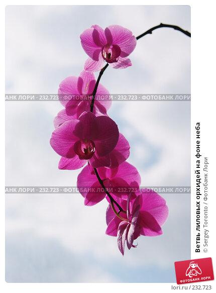 Купить «Ветвь лиловых орхидей на фоне неба», фото № 232723, снято 22 марта 2008 г. (c) Sergey Toronto / Фотобанк Лори