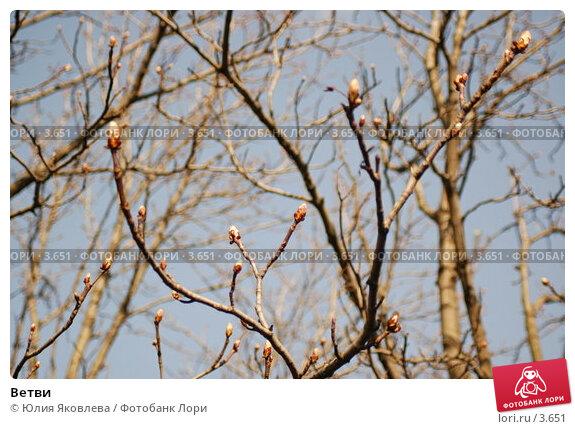 Ветви, фото № 3651, снято 26 апреля 2006 г. (c) Юлия Яковлева / Фотобанк Лори