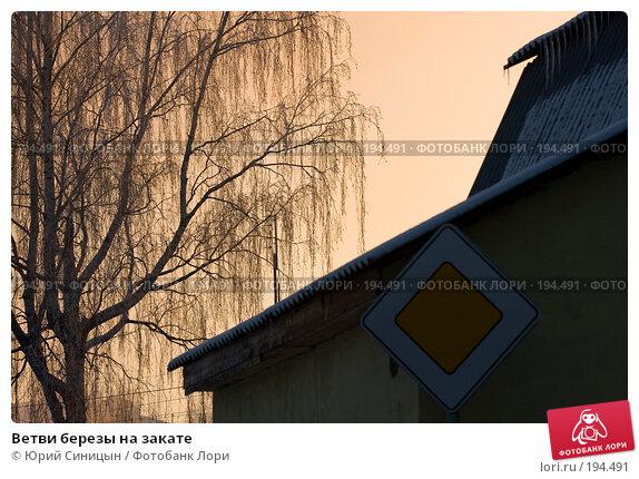 Купить «Ветви березы на закате», фото № 194491, снято 6 января 2008 г. (c) Юрий Синицын / Фотобанк Лори
