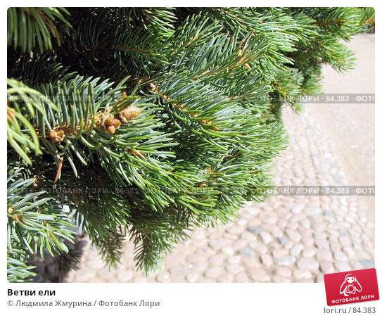 Ветви ели, фото № 84383, снято 5 августа 2007 г. (c) Людмила Жмурина / Фотобанк Лори