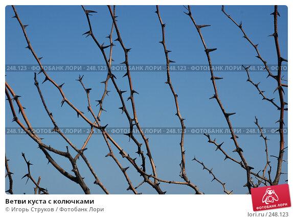 Ветви куста с колючками, фото № 248123, снято 9 апреля 2008 г. (c) Игорь Струков / Фотобанк Лори