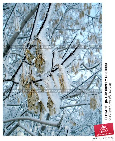 Ветви покрытые снегом и инеем, фото № 218299, снято 24 января 2017 г. (c) ElenArt / Фотобанк Лори