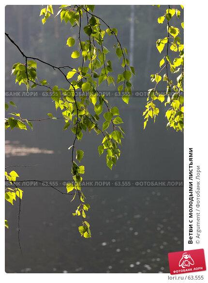Ветви с молодыми листьями, фото № 63555, снято 10 августа 2006 г. (c) Argument / Фотобанк Лори