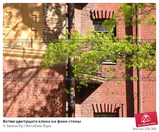 Ветви цветущего клена на фоне стены, фото № 276343, снято 2 мая 2008 г. (c) Заноза-Ру / Фотобанк Лори