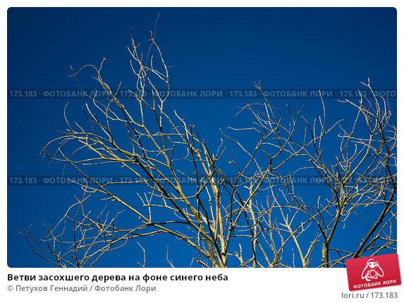 Ветви засохшего дерева на фоне синего неба, фото № 173183, снято 15 июля 2007 г. (c) Петухов Геннадий / Фотобанк Лори
