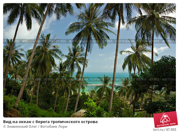 Вид на океан с берега тропического острова, фото № 47955, снято 22 февраля 2006 г. (c) Знаменский Олег / Фотобанк Лори