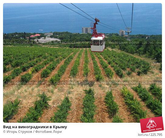 Вид на виноградники в Крыму, фото № 225795, снято 29 июня 2005 г. (c) Игорь Струков / Фотобанк Лори