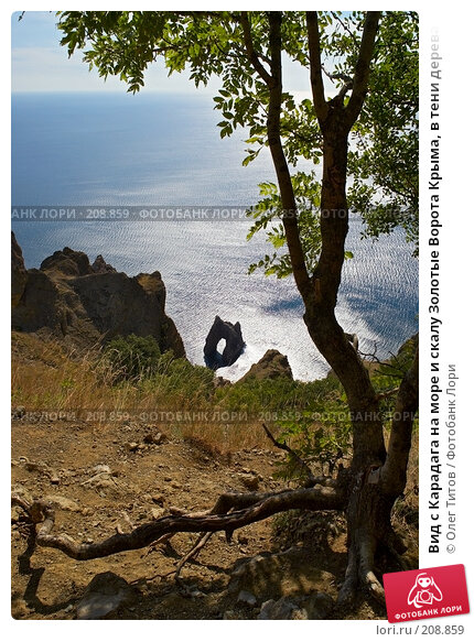 Вид с Карадага на море и скалу Золотые Ворота Крыма, в тени дерева на переднем плане, фото № 208859, снято 11 сентября 2006 г. (c) Олег Титов / Фотобанк Лори