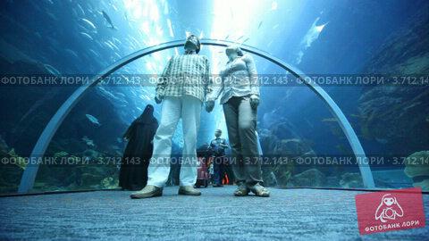 Купить «Вид снизу на пару в океанариуме», видеоролик № 3712143, снято 3 декабря 2010 г. (c) Losevsky Pavel / Фотобанк Лори
