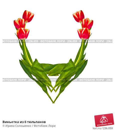 Купить «Виньетка из 6 тюльпанов», иллюстрация № 236059 (c) Ирина Солошенко / Фотобанк Лори