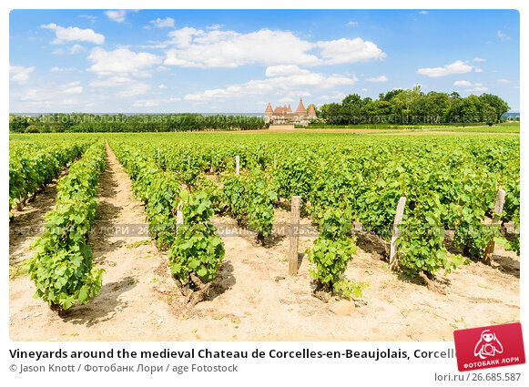 vineyards around the medieval chateau de corcelles en beaujolais corcelles en beaujolais. Black Bedroom Furniture Sets. Home Design Ideas