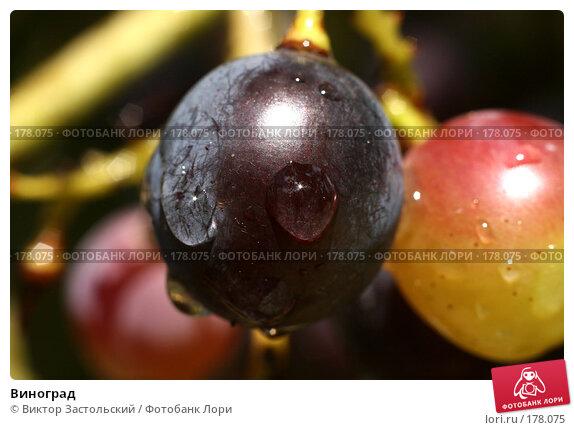 Виноград, фото № 178075, снято 14 сентября 2007 г. (c) Виктор Застольский / Фотобанк Лори