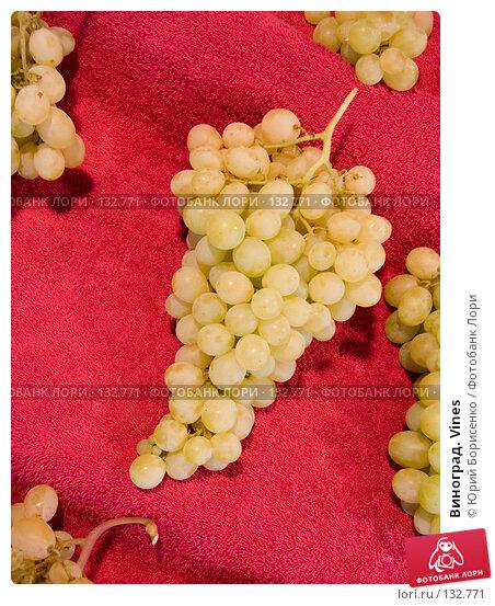 Виноград. Vines, фото № 132771, снято 20 октября 2007 г. (c) Юрий Борисенко / Фотобанк Лори