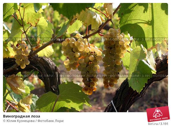 Виноградная лоза, фото № 3191, снято 1 мая 2017 г. (c) Юлия Кузнецова / Фотобанк Лори