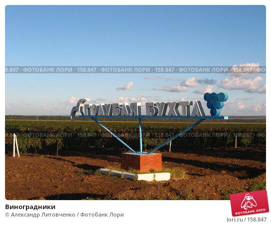 Купить «Виноградники», фото № 158847, снято 11 сентября 2007 г. (c) Александр Литовченко / Фотобанк Лори