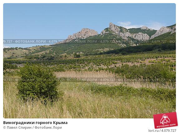 Виноградники горного Крыма (2011 год). Стоковое фото, фотограф Павел Спирин / Фотобанк Лори