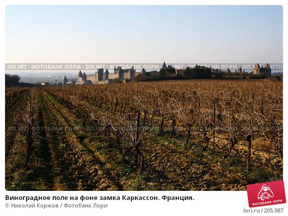 Виноградное поле на фоне замка Каркассон. Франция., фото № 205987, снято 30 декабря 2006 г. (c) Николай Коржов / Фотобанк Лори