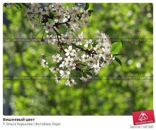 Вишневый цвет, фото № 147547, снято 21 мая 2007 г. (c) Ольга Хорькова / Фотобанк Лори