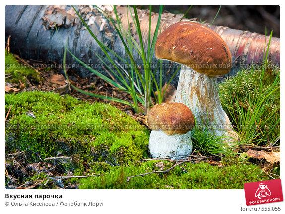 Купить «Вкусная парочка», фото № 555055, снято 4 августа 2008 г. (c) Ольга Киселева / Фотобанк Лори