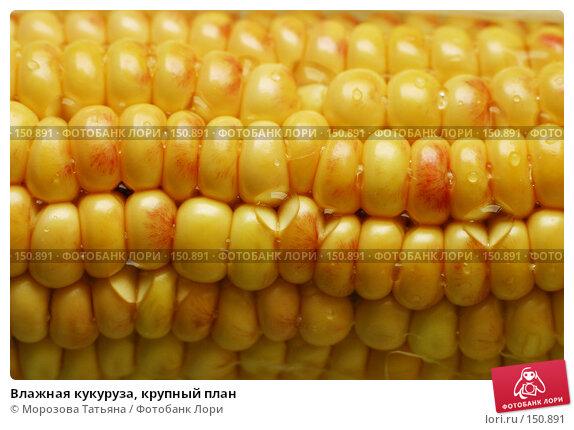 Купить «Влажная кукуруза, крупный план», фото № 150891, снято 13 сентября 2006 г. (c) Морозова Татьяна / Фотобанк Лори