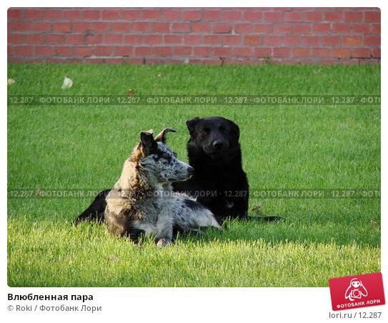 Купить «Влюбленная пара», фото № 12287, снято 16 сентября 2006 г. (c) Roki / Фотобанк Лори
