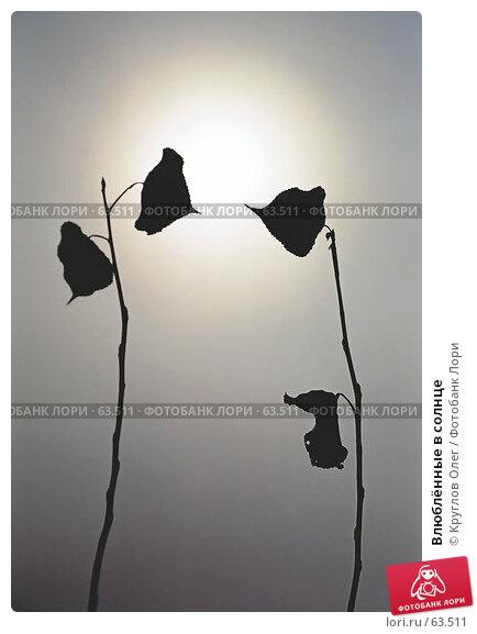 Влюблённые в солнце, эксклюзивное фото № 63511, снято 24 октября 2016 г. (c) Круглов Олег / Фотобанк Лори
