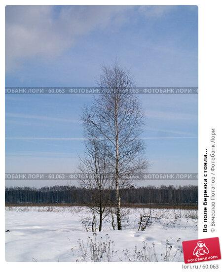 Во поле березка стояла..., фото № 60063, снято 10 марта 2007 г. (c) Вячеслав Потапов / Фотобанк Лори