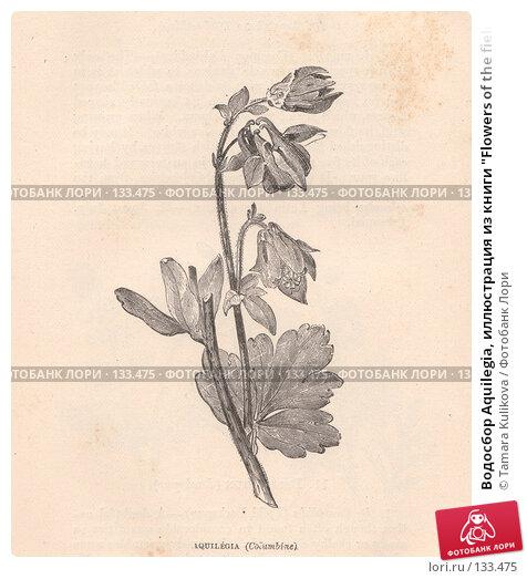 "Водосбор Aquilegia, иллюстрация из книги ""Flowers of the field"", издано в Лондоне в 1888, иллюстрация № 133475 (c) Tamara Kulikova / Фотобанк Лори"