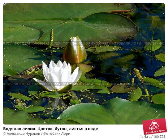 Водяная лилия. Цветок, бутон, листья в воде, фото № 100723, снято 2 июля 2006 г. (c) Александр Чураков / Фотобанк Лори