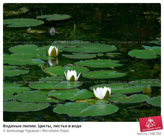Водяные лилии. Цветы, листья в воде, фото № 100747, снято 2 июля 2006 г. (c) Александр Чураков / Фотобанк Лори