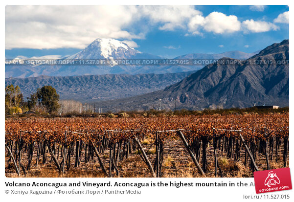 Купить «Volcano Aconcagua and Vineyard. Aconcagua is the highest mountain in the Americas at 6,962 m (22,841 ft). It is located in the Andes mountain range, in the Argentine province of Mendoza», фото № 11527015, снято 17 февраля 2020 г. (c) PantherMedia / Фотобанк Лори