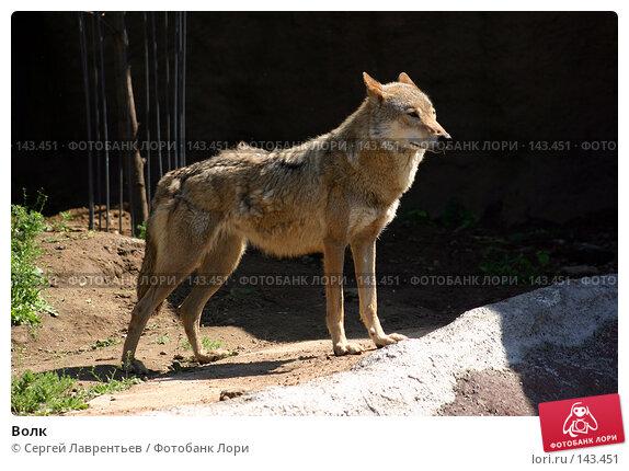 Волк, фото № 143451, снято 24 июня 2004 г. (c) Сергей Лаврентьев / Фотобанк Лори