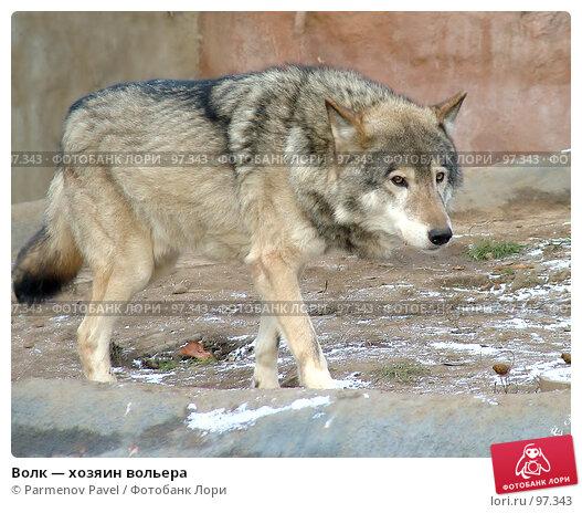 Волк — хозяин вольера, фото № 97343, снято 5 ноября 2006 г. (c) Parmenov Pavel / Фотобанк Лори