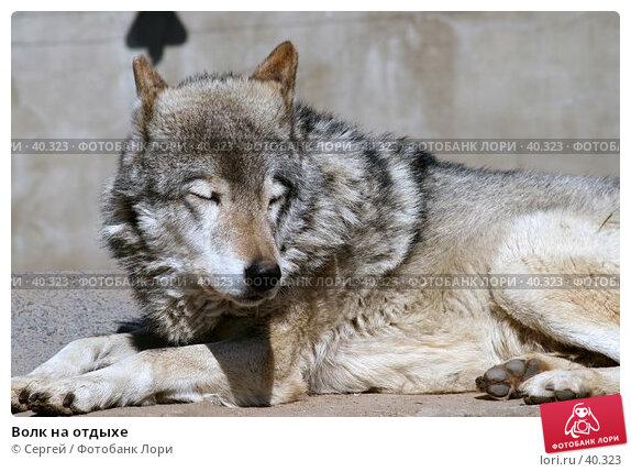 Волк на отдыхе, фото № 40323, снято 10 апреля 2007 г. (c) Сергей / Фотобанк Лори