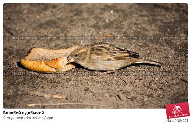 Воробей с добычей, фото № 109291, снято 12 апреля 2007 г. (c) Argument / Фотобанк Лори
